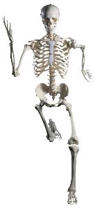 Classic Skeleton Stan